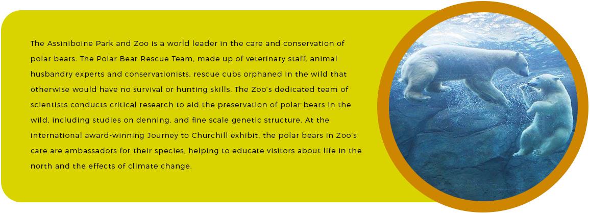 Polar-Bear-Conservation