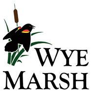 Wyne-Marsh